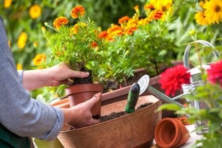 gartenbepflanzung: schöne blumen für den garten