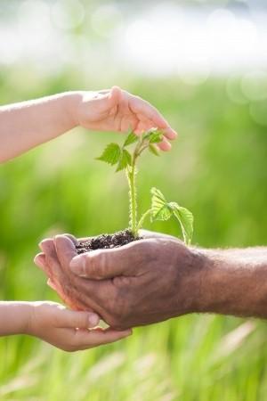 pflanzenschutz vom gartenprofi
